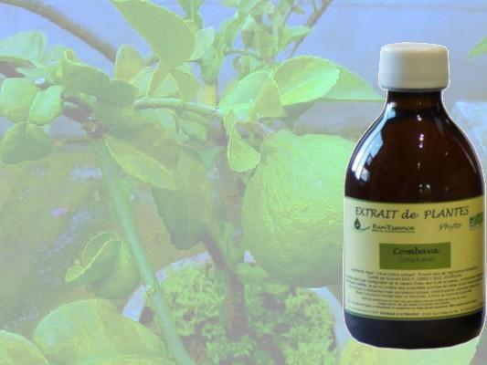 Le combava, en extrait de plante de distillée, permet de perdre du poids par un drainage général de l'organisme...